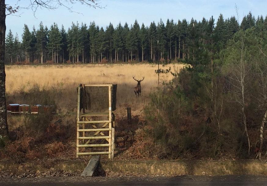Cerf dans un champs au domaine de La maisonnette